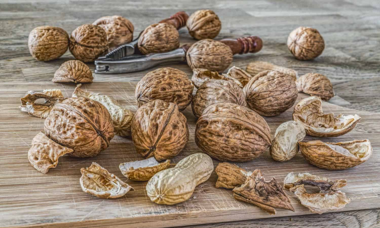 how to grow nuts