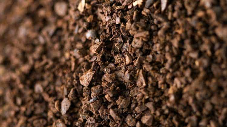 survival uses for coffee grounds