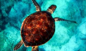 interesting facts about sea turtles